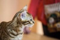 В Туле прошла выставка «Пряничные кошки» , Фото: 117