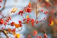 Золотая осень в Тульской области, Фото: 71