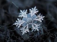 Макрофотографии снежинок, Фото: 7
