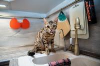 Экзотические животные в квартире, Фото: 47