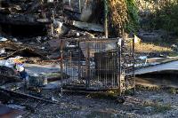 Тулячка погибла, спасая запертых в горящем доме собак: подробности истории , Фото: 6