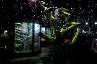Тульский экзотариум: животные, Фото: 15