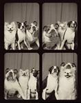 Собаки в фотобудке, Фото: 3