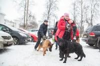Всероссийская выставка собак 2017, Фото: 61