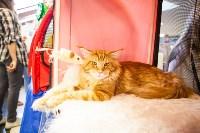 """Выставка """"Пряничные кошки"""". 15-16 августа 2015 года., Фото: 118"""