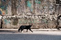 Тульские котики, Фото: 76