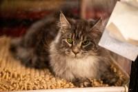Пряничные кошки, Фото: 5