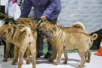 Выставка собак в Туле 14.04.19, Фото: 26