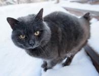 Снежное Поленово, Фото: 21