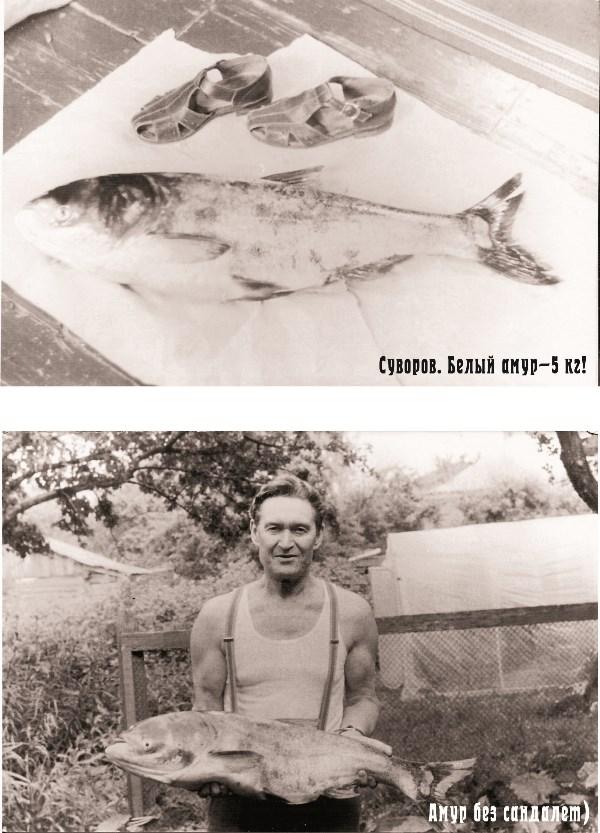 Фото примерно 1965 года. На нем – мой папа, Вячеслав Иванович, которому сегодня исполняется 90 лет. Он жив и местами здоров :-). Его увлечение рыбалкой передалось и мне. Всё сознательное детство и юность я ездила с ним «мочить крючки»