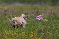 В Туле состоялись собачьи бега, Фото: 10