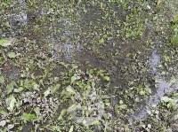 Дворы на Красноармейском проспекте затопило нечистотами, Фото: 14