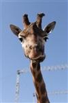 Цирк огромных зверей. Тула, Осиновая гора, 1, Фото: 14