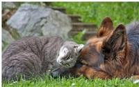 Дружба животных, Фото: 5
