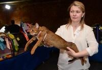 Выставка кошек в Искре, Фото: 77