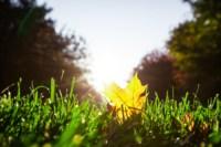 Центральный парк, утро, осень, Фото: 45
