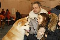 В Туле прошла всероссийская выставка собак, Фото: 9