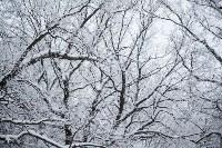 Темная сторона Платоновского парка, Фото: 3