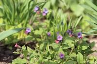 Краски весны в Туле, Фото: 28