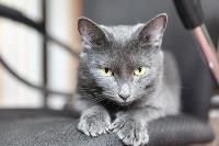 Тульские котики, Фото: 9