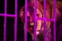Шоу фонтанов «13 месяцев»: успей увидеть уникальную программу в Тульском цирке, Фото: 193