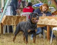 Международная выставка собак, Барсучок. 5.09.2015, Фото: 79
