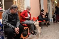 """Выставки собак в ДК """"Косогорец"""", Фото: 59"""