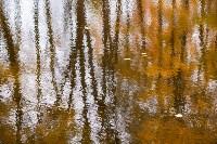 Золотая осень в Туле-2019, Фото: 112