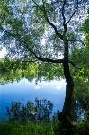 Летний день в Ясной Поляне, Фото: 44