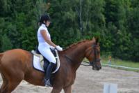 В Ясной поляне стартовал турнир по конному спорту, Фото: 133
