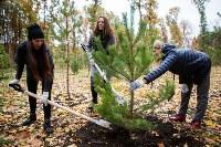 В Центральном парке Тулы появился сосновый бор «Слободы», Фото: 10
