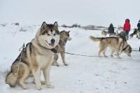 Праздник северных собак на Куликовом поле , Фото: 53
