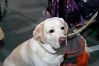 Выставка собак в Туле 26.01, Фото: 6