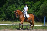 В Ясной поляне стартовал турнир по конному спорту, Фото: 102