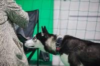 Выставка собак в Туле, Фото: 14