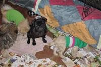 Похищенные собаки, Фото: 5