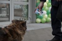 Дворняги, дворяне, двор-терьеры: 50 фото самых потрясающих уличных собак, Фото: 25