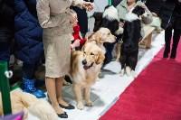 Выставка собак в Туле, Фото: 51