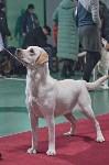 Выставка собак в Туле 26.01, Фото: 80