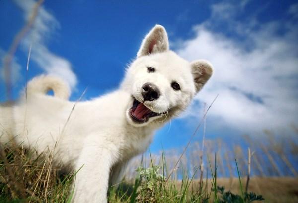 у животных и детей самая искренняя улыбка!)