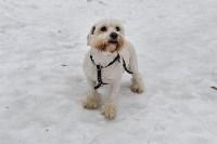 В Комсомольском парке прошёл рейд по выявлению собачников-нарушителей, Фото: 19