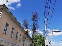 В Туле гибнут деревья, Фото: 29
