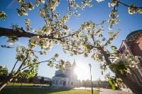 Яблони у кремля, Фото: 18