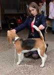"""Выставки собак в ДК """"Косогорец"""", Фото: 17"""
