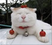 Самый ленивый кот, Фото: 2