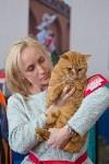 Выставка кошек в ГКЗ. 26 марта 2016 года, Фото: 94