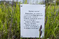 Тишина, солнце и бесконечный простор: 90 красивых фото с родины слонов – Одоевского района, Фото: 7