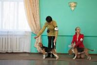 Выставка собак в Туле, 29.11.2015, Фото: 69