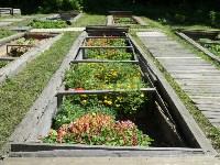 Травы и цветы Ясной Поляны, Фото: 11
