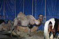 Цирк огромных зверей. Тула, Осиновая гора, 1, Фото: 8